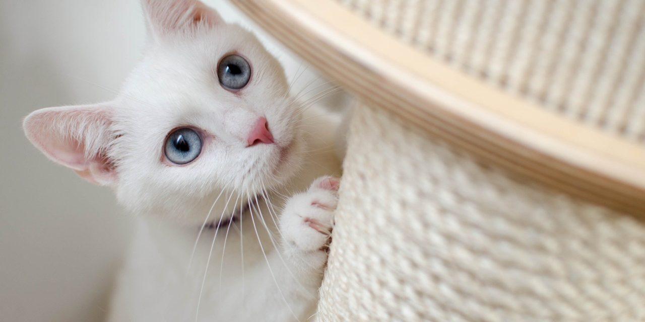 Driller din kat dig, når du gamer?