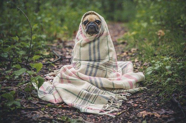 Dæk din hund og hold den varm med et hundedækken