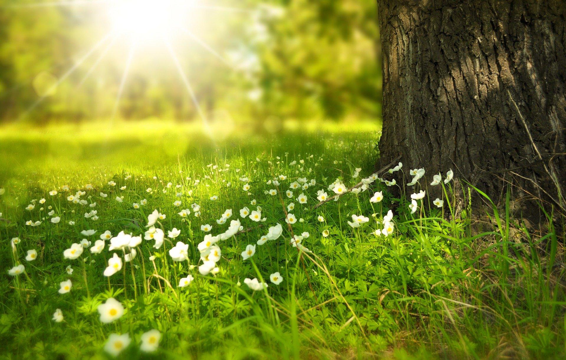 blomster, græs, træ